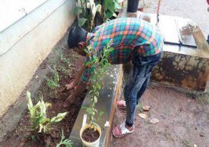 Celebrating National Tree Plantation Day - IMCOST